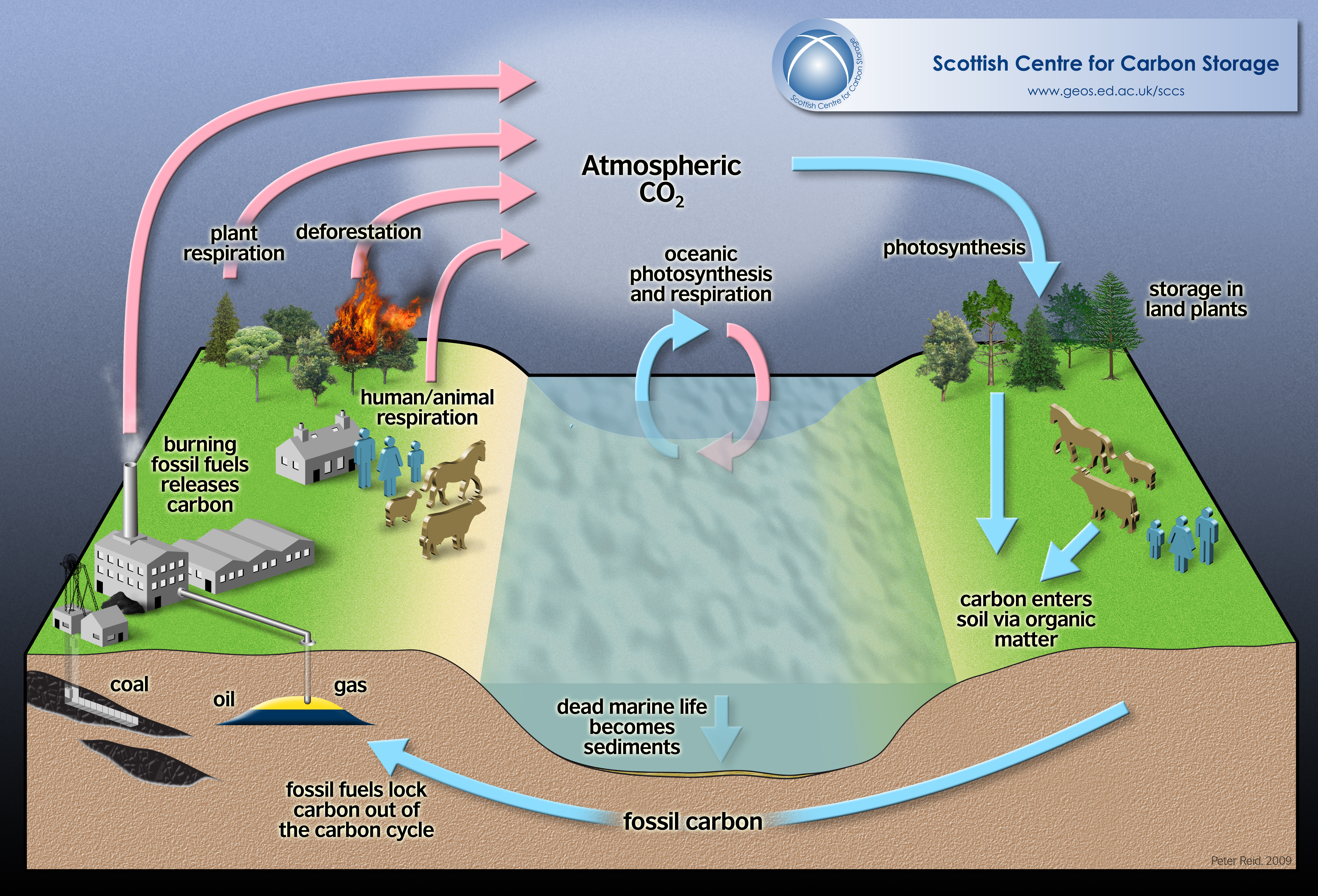 Carbon dioxide cycle diagram ccuart